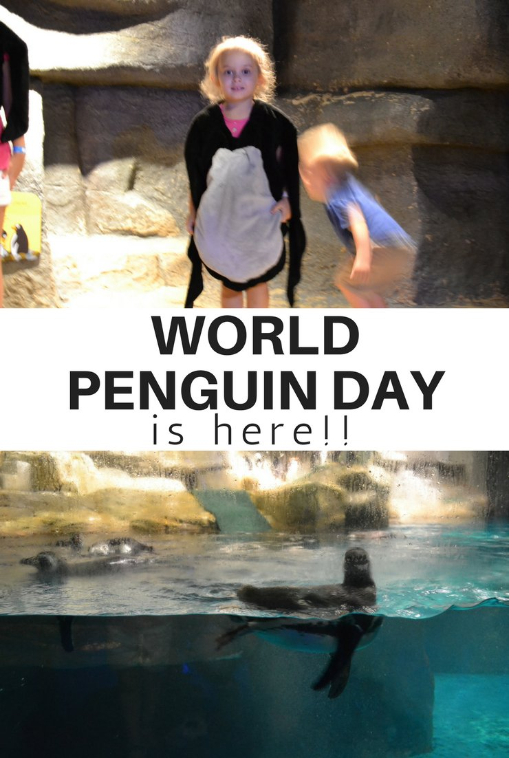 We're celebrating something special today - World Penguin Day! We're taking a waddle walk and heading to the zoo to check out some penguins in person.
